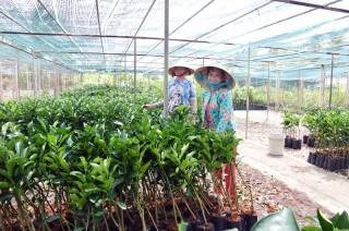 Đồng bằng sông Cửu Long: Cơ hội khởi nghiệp với nông nghiệp ứng dụng công nghệ cao