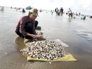 Hợp tác xã thủy sản Rạng Đông: Tích cực đóng góp xây dựng nông thôn mới