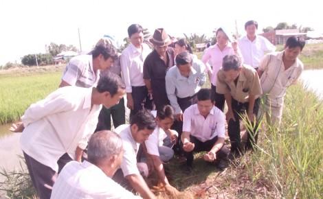 Ương tôm càng xanh toàn đực trong ruộng lúa ở Thạnh Phú