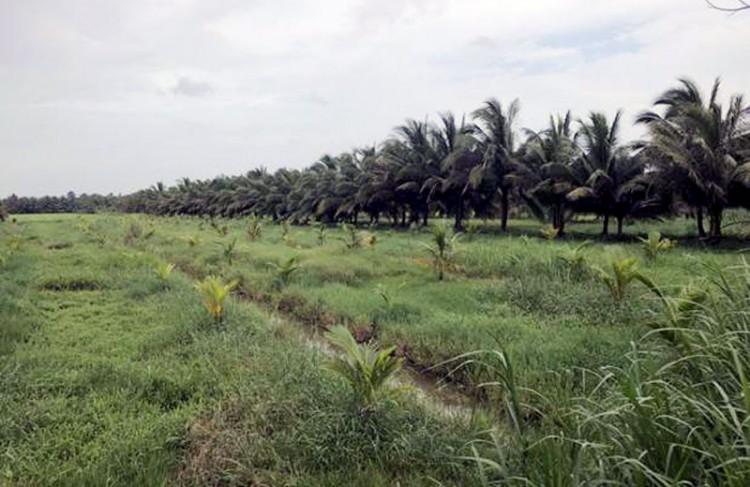 Quy định góp quyền sử dụng đất và điều chỉnh lại quyền sử dụng đất trên địa bàn tỉnh