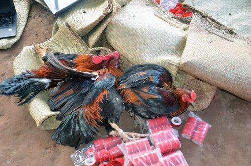 Triệt phá trường gà thu giữ hơn nửa tỉ đồng
