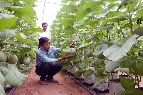 Tạo đột phá phát triển kinh tế nông nghiệp tỉnh nhà