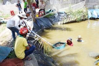 Thạnh Phú: Sản xuất nông nghiệp tiếp tục tăng trưởng