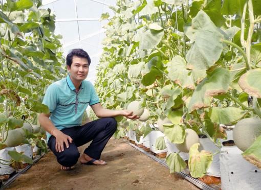 Thu nhập cao từ trồng dưa lưới trong nhà màng