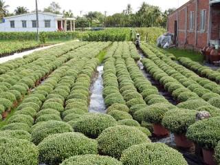 Phát triển kinh tế nông nghiệp Chợ Lách