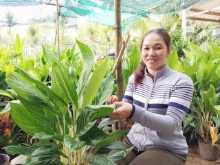 Hội Liên hiệp Phụ nữ huyện Chợ Lách: Tiếp sức phụ nữ khởi nghiệp