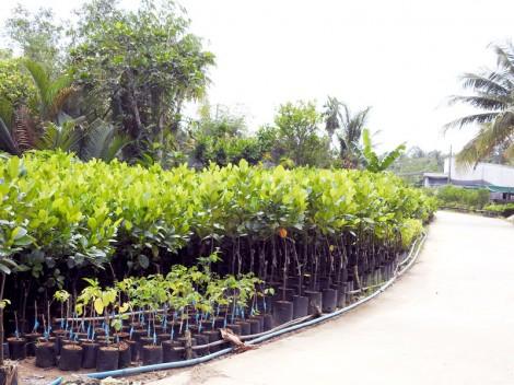 Chợ Lách tăng cường quản lý chất lượng giống cây trồng