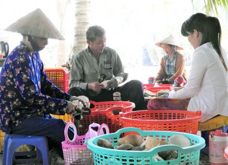 Định hướng phát triển bền vững ngành dừa