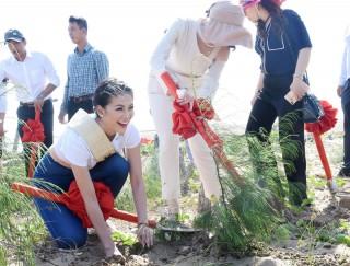Hoa hậu trái đất Nguyễn Phương Khánh trồng cây gây rừng tại Thạnh Phú