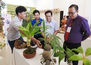 Độc đáo bonsai dừa