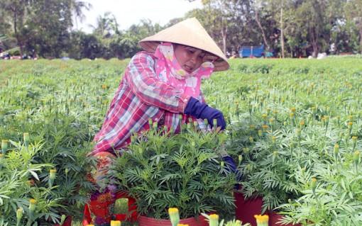 Hoa kiểng và cây giống góp phần tăng thu nhập cho người dân Tân Thiềng