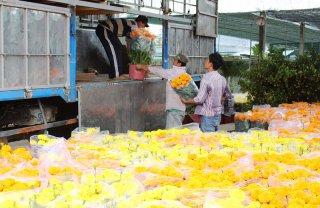 Chợ Lách: Hơn 10 triệu sản phẩm hoa kiểng các loại phục vụ Tết Kỷ Hợi