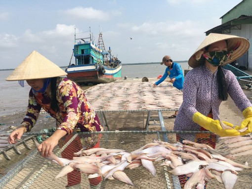 Làng nghề cá khô Bình Thắng đón Tết