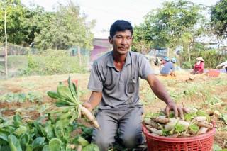 Nông dân Thừa Đức trúng mùa củ cải trắng