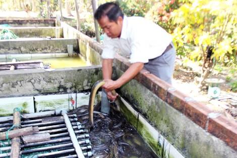 Làm giàu nhờ nghề nuôi lươn