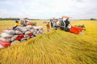 Cho vay sản xuất, tiêu thụ lúa gạo đồng bằng sông Cửu Long