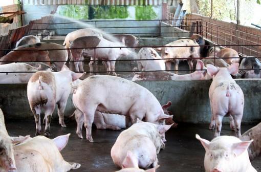 Chỉ đạo thông tin, tuyên truyền phòng chống dịch tả lợn châu Phi