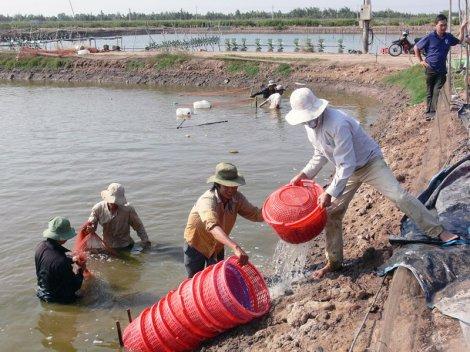 Quý I-2019, kinh tế huyện Bình Đại duy trì và phát triển