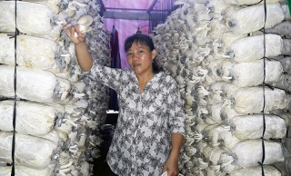Mô hình trồng nấm cho thu nhập cao