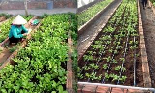 Ứng dụng khoa học và công nghệ phòng chống hạn, mặn trong nông nghiệp