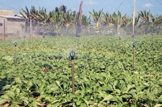 Thừa Đức nhân rộng mô hình trồng màu tưới tiết kiệm nước