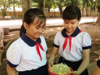 Hiệu quả từ mô hình trồng rau sạch tại trường Tiểu học Tân Thạch B