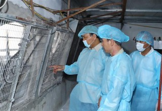 Thủ tướng: Cần huy động cả hệ thống chính trị vào cuộc phòng chống dịch tả lợn châu Phi