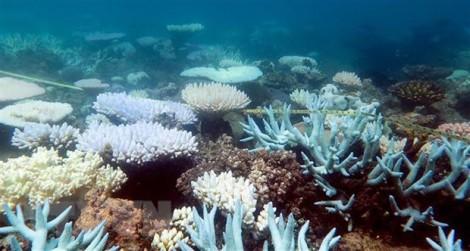 Liên hợp quốc kêu gọi lãnh đạo các nước cứu trái đất trước biến đổi khí hậu
