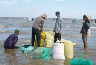 Hợp tác xã Thủy sản Đồng Tâm khai thác nghêu đạt doanh thu hơn 5,9 tỷ đồng