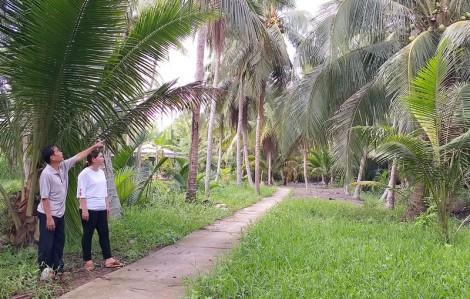 Trồng dừa hữu cơ: Hướng phát triển bền vững cho chuỗi giá trị cây dừa