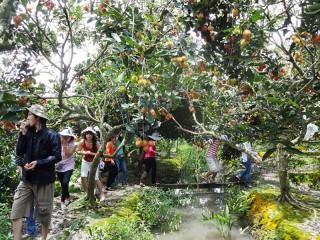 Tour lễ hội cây - trái ngon tỉnh Bến Tre 2019