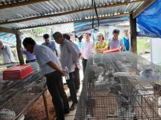 Nông dân Ba Tri tham quan học tập mô hình nuôi thỏ ở Châu Thành