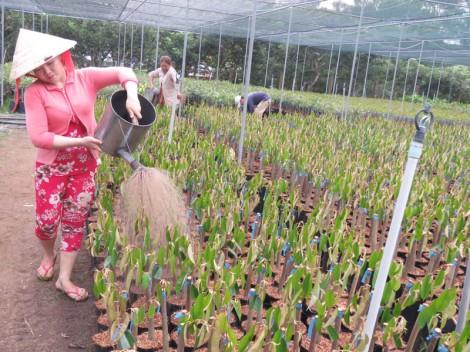 Sôi động thị trường cây giống Chợ Lách
