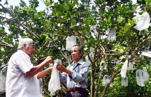 Nâng chất phong trào nông dân thi đua sản xuất, kinh doanh giỏi