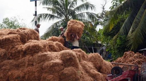 Bước tiến chế biến sản phẩm dừa