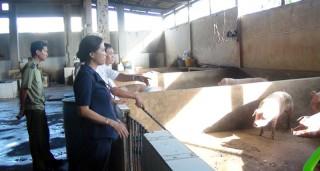 TP. Bến Tre kiểm tra, giám sát  công tác phòng chống dịch tả heo châu Phi