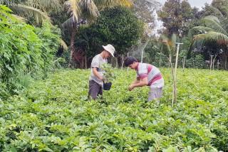 Đồng bộ trong thực hiện tiêu chí môi trường và an toàn thực phẩm