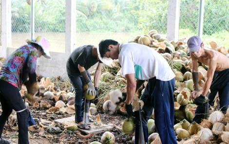 Hợp tác xã nông nghiệp Châu Bình gặp khó trong vay vốn sản xuất