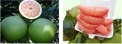 Bảo hộ chỉ dẫn địa lý Bến Tre cho sản phẩm bưởi da xanh và dừa uống nước xiêm xanh (kỳ 1)