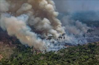 Brazil thuê cảnh sát môi trường đối phó với cháy rừng Amazon
