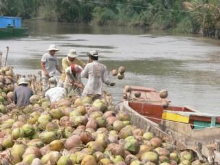 Giá dừa khô nguyên liệu tăng