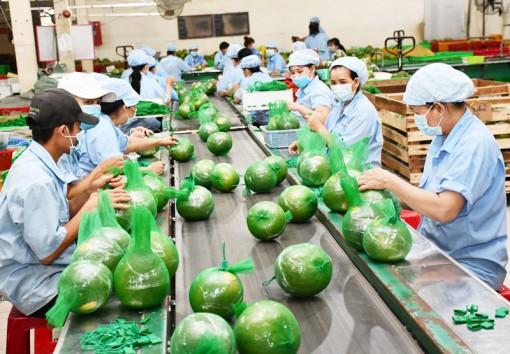 Hướng đi bền vững cho ngành nông nghiệp