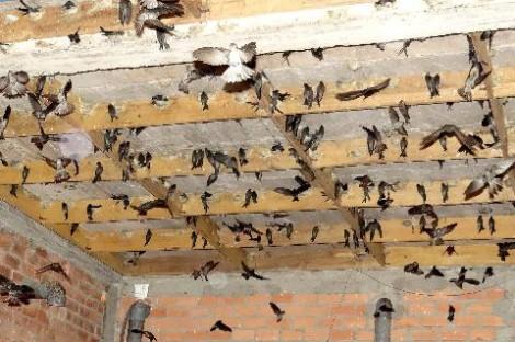 Ðưa hoạt động nuôi chim yến vào nền nếp