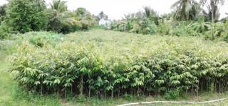 Hợp tác xã Nông nghiệp Tân Thiềng hoạt động hiệu quả