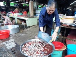 Cá linh về chợ không nhiều