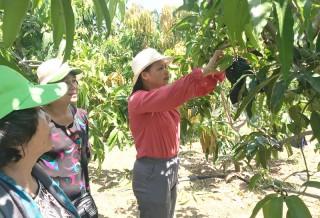 Kinh tế - xã hội Thạnh Phú tiếp tục chuyển biến tích cực