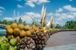 Tấm lòng với cây dừa