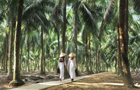 Nét đẹp xứ Dừa qua ống kính nhiếp ảnh