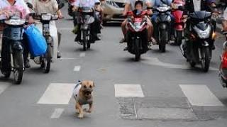 Điều khiển xe tông chó tử vong