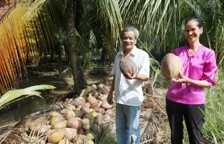 Nông dân Bình Đại phấn khởi nhờ chăm sóc dừa theo tiêu chuẩn hữu cơ